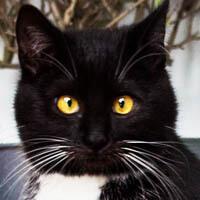 Esmeralda, kot do adopcji, Poznań, Dopiewo