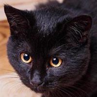 Lea, kot do adopcji, Poznań, Dopiewo