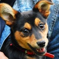 Maszka, pies do adopcji, Poznań,Dopiewo