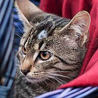 Nathan, kot do adopcji, Poznań, Dopiewo