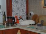 03.10.17 - teddy w stalym domu (4)