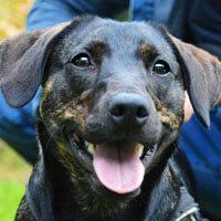 Bonnie, pies do adopcji, poznań, dopiewo