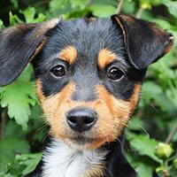 Daszka, pies do adopcji, poznań, dopiewo