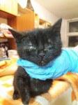 Koty z giełdy w Przeźmierowie proszą o pomoc!