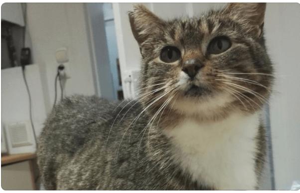 Zbiórka na kotkę z nowotworem