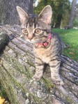 Dwie 4-miesięczne kotko szukają domu