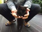Kotek do adopcji!