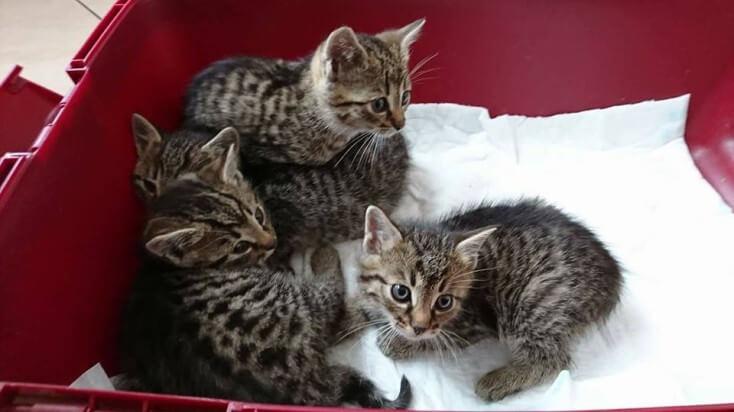 4 maluchy szukają domów!