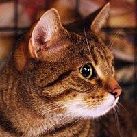 Mimi, kot do adopcji, Poznań, Dopiewo