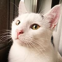 Sezamek, kot do adopcji, Poznań, Dopiewo
