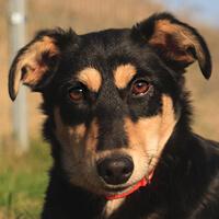 Zosia, pies do adopcji, poznań, dopiewo