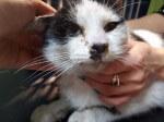Kolejny kot z giełdy pod naszą opieką
