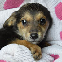 megi, pies do adopcji, poznań, dopiewo