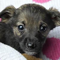 misi, pies do adopcji, poznań, dopiewo