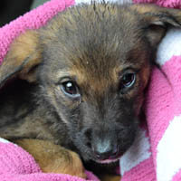 napi, pies do adopcji, poznań, dopiewo