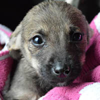 Niki, pies do adopcji, Poznań, dopiewo