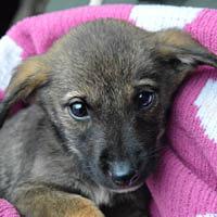 nino, pies do adopcji, poznań , dopiewo