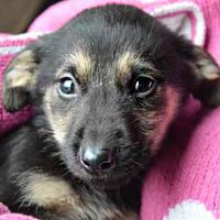 nuni, pies do adopcji, poznań, dopiewo