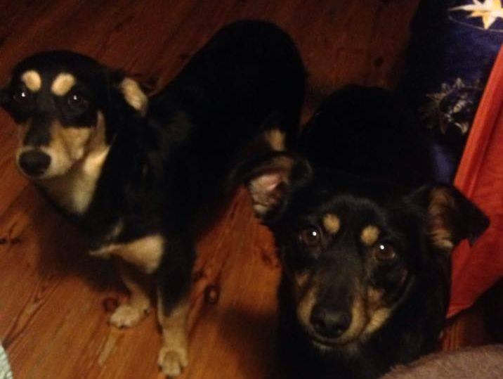 Maja i Zosia czekają na dom