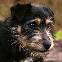 Benuś, pies do adopcji, Poznań, Dopiewo