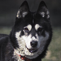 Nuka, pies do adopcji, Poznań, Dopiewo