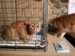 Historia kota na smyczy powraca