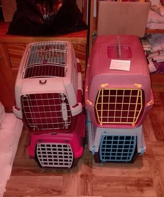 Poznań- potrzebny transport dla kotow!