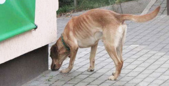 01.09.2011r.- Poznań – Fado – pies, który nigdy nie był wyprowadzany