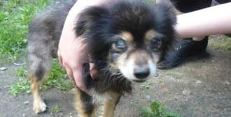 Poznań - pomoc dla 2 psów i kotów na terenie jednej z poznańskiej posesji