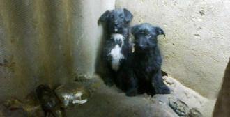 Przemyśl - 2 suki w ciąży i 3 szczeniaki odebrane z fatalnych warunków
