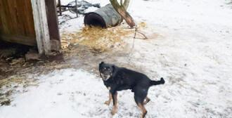 Interwencja pod Pobiedziskami - złe warunki dla psów i odebrany ważący jedyne 1.8 kg kot