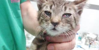 Poznań - kocia rodzinka w opłakanym stanie (4 kocięta i 2 dorosłe kotki)