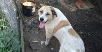 Młynkowo - Elza - zostawiona bez opieki - jadła resztki nawet sprzed kilku tygodni