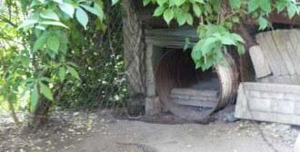 17.05.2011 – Skórzewo – psiaki z beczek
