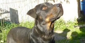 Swarzędz - zlękniony pies Rodi i jego alarmujące warunki bytowania
