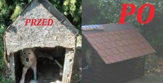 Interwencja w Gałowie i poprawa warunków psa Harrego z Przeźmierowa