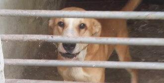 Krzyszkowice - 4 psów mieszkająca w pozostałościach po kurniku odebrana przy asyście policji