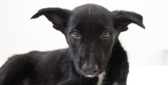 04.06.2011 – Sarbinowo – psia matka ginie na oczach swych dzieci
