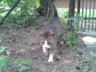 Zaginiony kot - czyja zguba?