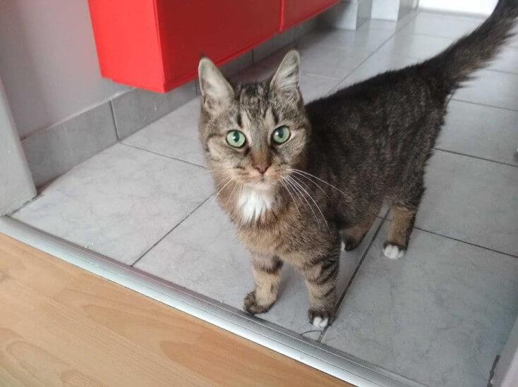 Starsza kotka DONA straciła dom - POMÓŻ - Poznań!