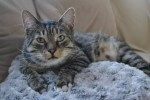 Niepełnosprawny kot bez łapki pilnie potrzebuje domu!