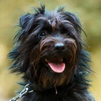 Miko, pies do adopcji, Poznań, Dopiewo