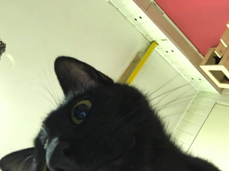 Passatowe selfie