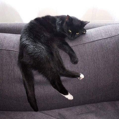 Zaginął 3-letni kot Ucinek