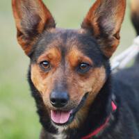 Vito, pies do adopcji, Poznań,dopiewo