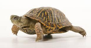 A Ty co wiesz o żółwiach?