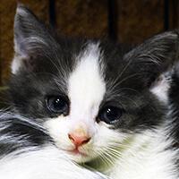 Groszek, kot do adopcji, Poznań, Dopiewo