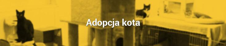 adopcja_kot