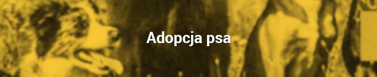 adopcja_pies