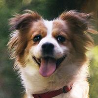 Pepi, pies do adopcji, Poznań, Dopiewo